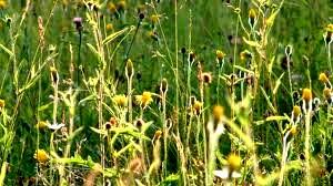 wakehurst meadow