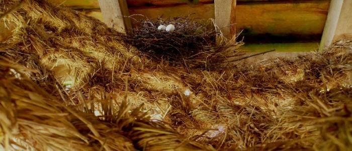 pigeon's nest on Meadow Weave Wakehurst