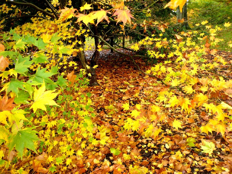 wakehurst autumn leaves