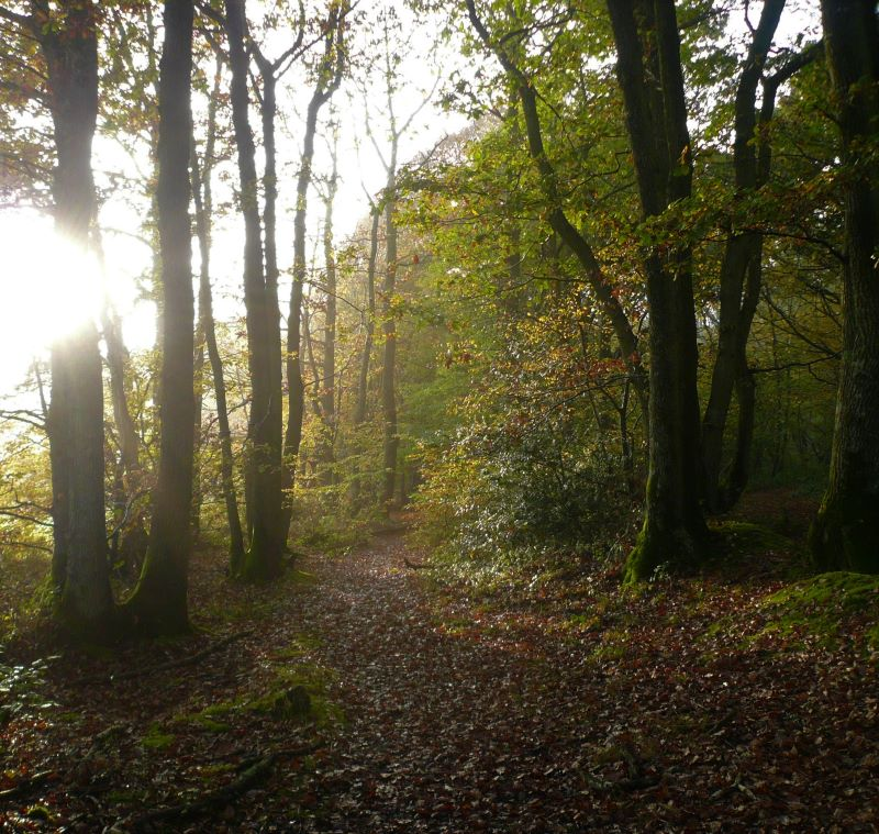 Mindfulness in Nature and Rewilding course Sussex Woods
